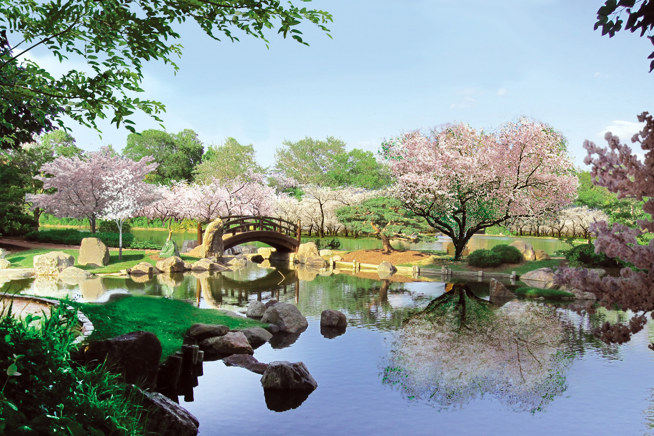 A Local Lawyer Is Hoping To Restore The Japanese Gardens In Jackson Park To  Their Former Glory, One Cherry Tree At A Time
