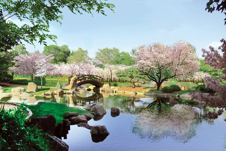 Nonprofit formed to restore Japanese gardens in Jackson Park